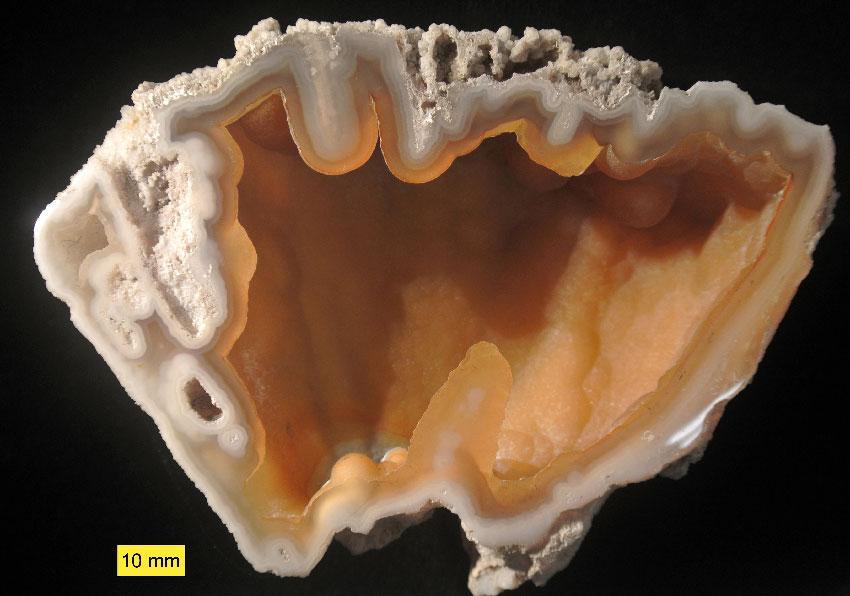 Агатизированный коралл