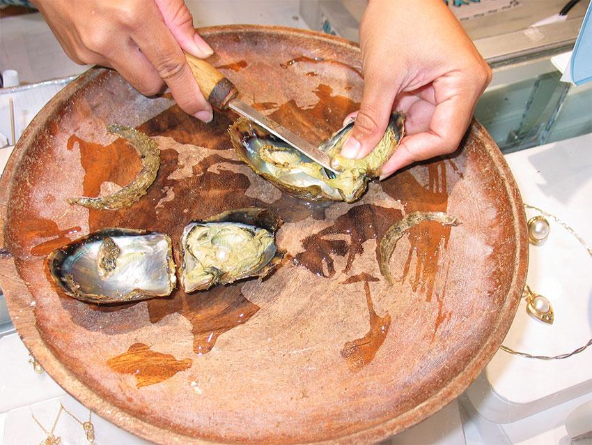 Жемчуг, извлекаемый из жемчужной устрицы акойя
