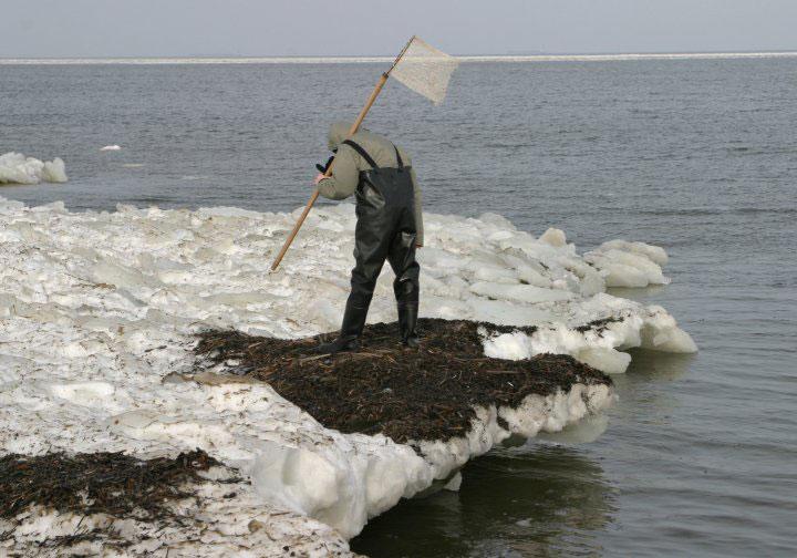 Ловля янтаря на побережье Балтийского моря. Зимние бури выбрасывают самородки янтаря. Рядом с Гданьском, Польша.